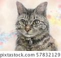 고양이 일러스트 57832129
