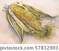 玉米,真實,水彩 57832903