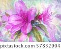 杜鵑花,春天,背景 57832904