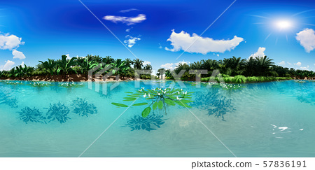 3d illustration spherical 360 degrees, seamless panorama of palm trees near oasis 57836191