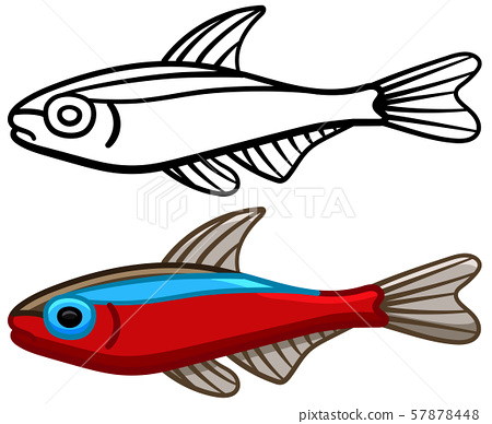 Cardinal tetra fish in colored and line versions 57878448