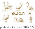 Hand draw, doodle graphic with birds. Vector illustration with swans isolated on white background 57887272