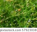 熊甲蟲和蜜蜂(蜜蜂飛) 57923038