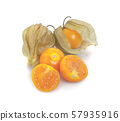 Cape gooseberry (physalis) isolated on white background 57935916