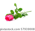 Pink rose isolated on white background. 57939008