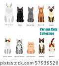 各种猫的清单 57939520