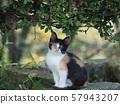 流浪貓,小貓,印花布 57943207