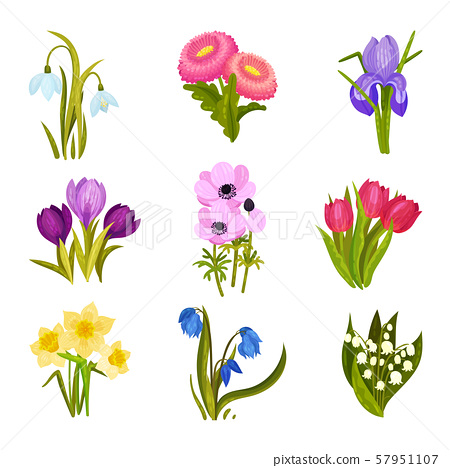 Set of images of spring flowers. Vector illustration on a white background. 57951107