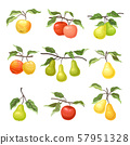 Set of apples and pears. Vector illustration on a white background. 57951328