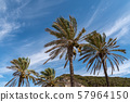 Palm trees on the background of mountains and blue sky with light clouds 57964150