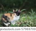 Stray cat, kitten, grass 57969709