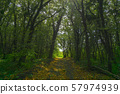 Forest path in mist. Beauty morning sunlight. 57974939
