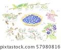 블루 베리의 성장 과정 57980816