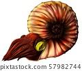 Ammonite 57982744
