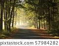 Path among oaks through an autumn forest on a misty sunny morning 57984282