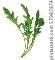 3D realistic rucola. Fresh salad or rucola. Collection green leaf arugula isolated on white 57987874