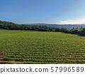 Aerial view of vineyard in Napa Valley during summer season 57996589