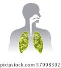 Fresh breath. Green Human lung illustration info 57998392