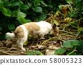 Abandoned abandoned dog 58005323