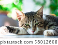 Cats, Alley Cats, Stray Cats 58012608