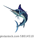 Striped marlin on white, fish sword. Realistic isolated illustration. 58014510