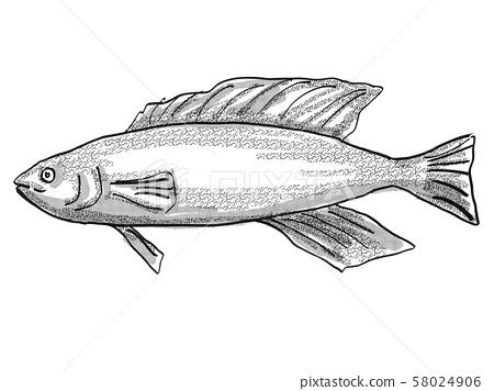 Butterfish New Zealand Fish Cartoon Retro Drawing 58024906