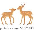 마주 사슴 쌍의 일러스트 58025383
