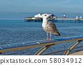 Seagull on Blackpool Pleasure Beach  - United 58034912