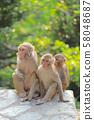 Monkey at hong kong, Kam Shan Country Park 2019 58048687