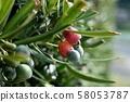 이누마키의 열매 58053787