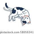 뒹굴기 고양이 58056341
