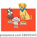 Three dogs and rice 58056343