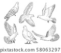 Illustrations set of pigeons. Hand drawn pictures of birds isolate on white 58063297