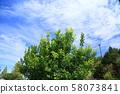 레몬 나무 58073841