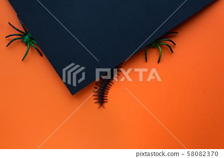 Halloween concept. Orange black background with insects. 58082370