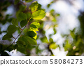 Closeup nature view of green leafs 58084273