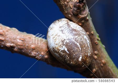 Cocoon of Iraga 58086543