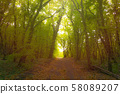 Forest path in mist. Beauty morning sunlight. 58089207