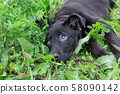 Cute homeless puppy is lying in the green grass. 58090142