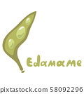 Soybean, edamame vector. Cartoon edamame green beans isolated on white background. 58092296