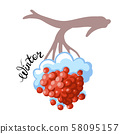 Branch with berries and snow. October. Vector illustration. 58095157