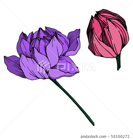 Vector Lotus floral botanical flower. Black and white engraved ink art. Isolated lotus illustration 58100272