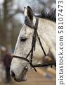 Portrait of white horse 58107473