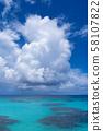[하 테루 마 섬] 波照間 블루 네발 58107822