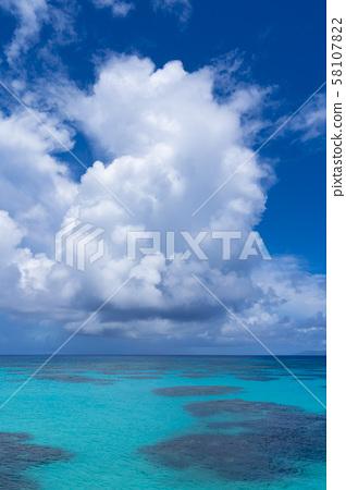 [Hateruma島] Hateruma藍色四足動物 58107822