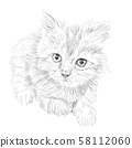 Drawing of adorable cat lying on white background. 58112060