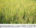 Ear rice 58112978