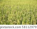 Ear rice 58112979