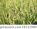 Ear rice 58112980