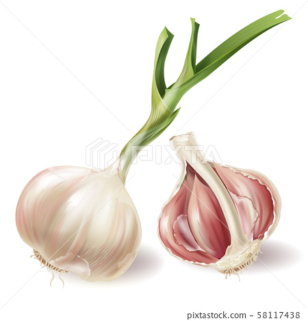 realistic sprouted head of garlic and half 58117438